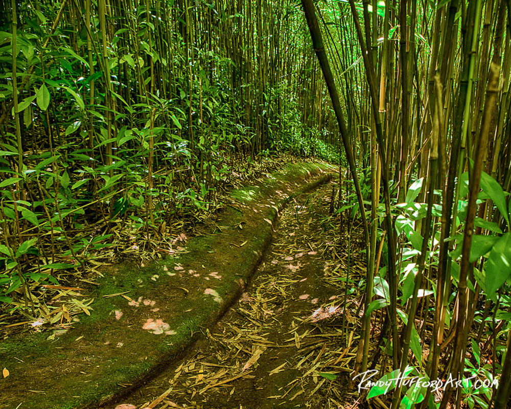 Brynne Bamboo Pathway