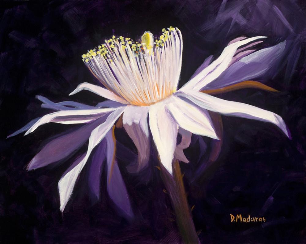 Night Blooming Cereus II | Madaras Gallery Tucson
