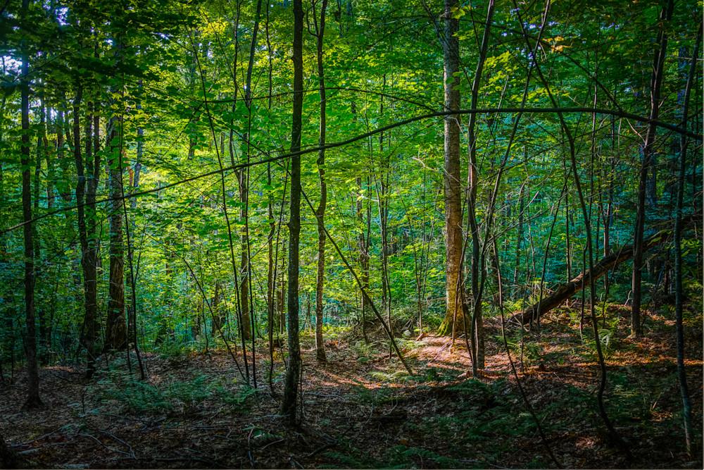 Landscape, Photography, Vermont,Saltash Mountain, forest