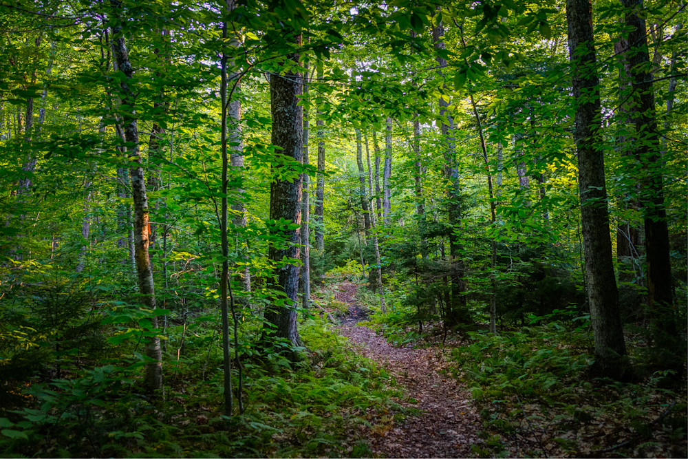 Photography, Vermont, forest, landscape