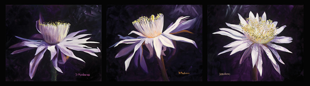Night Blooming Triptych | Southwest Art Gallery Tucson