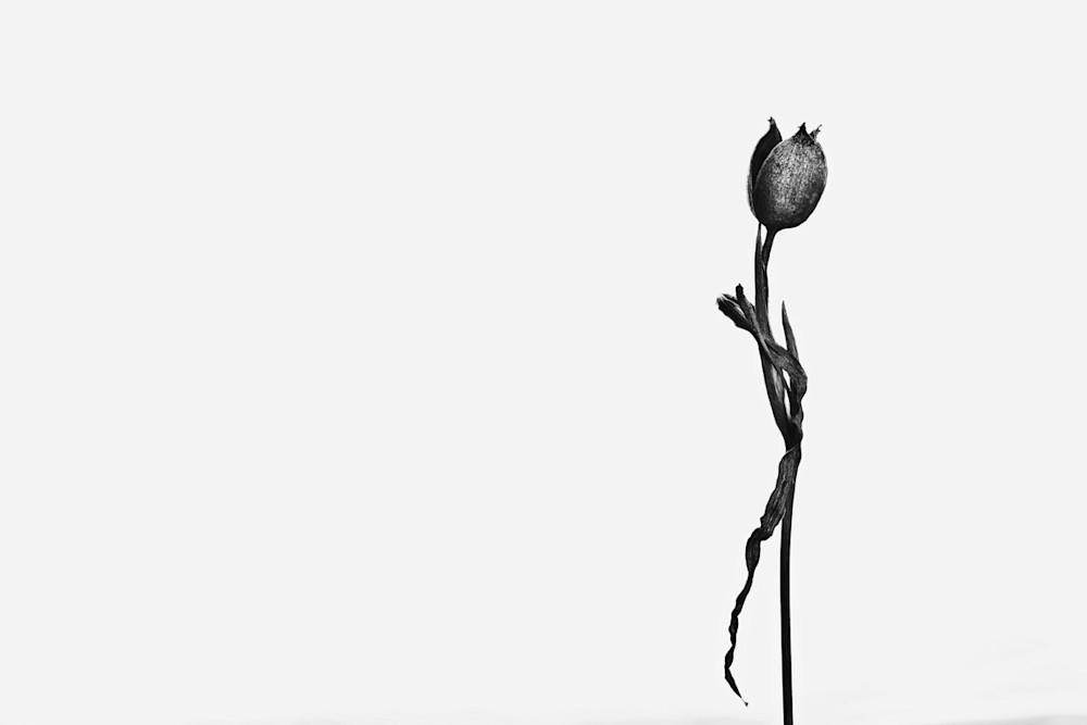 Solitaire | Susan Michal Fine Art