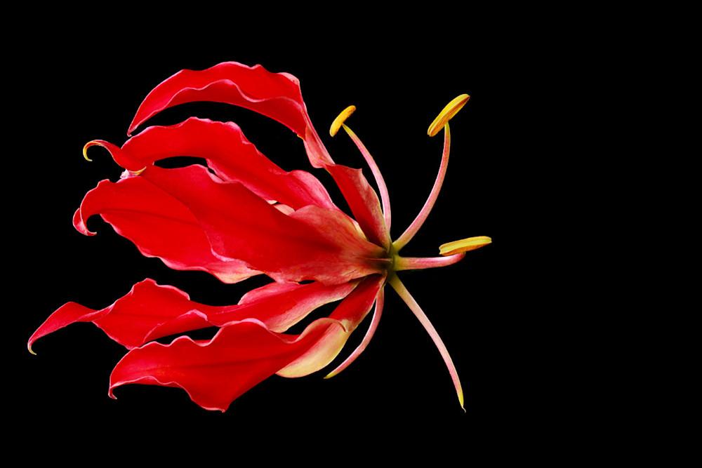 Gorgeous Fine Art Photography | Shop Susan Michal Fine Art