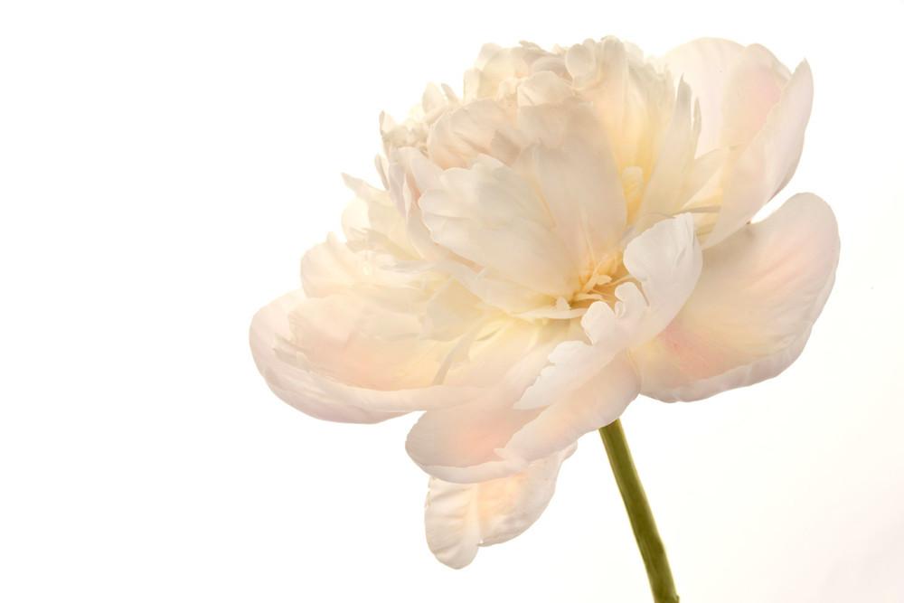 Shop Susan Michal Fine Art | Flower Photography