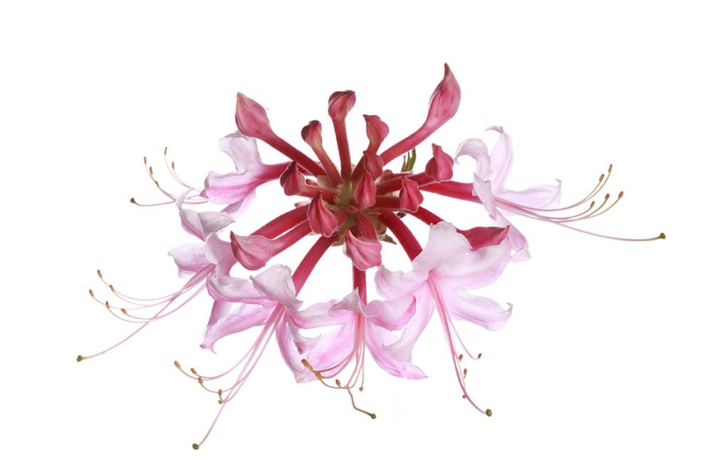 Fine Art Photography For Sale | Susan Michal | Flowers