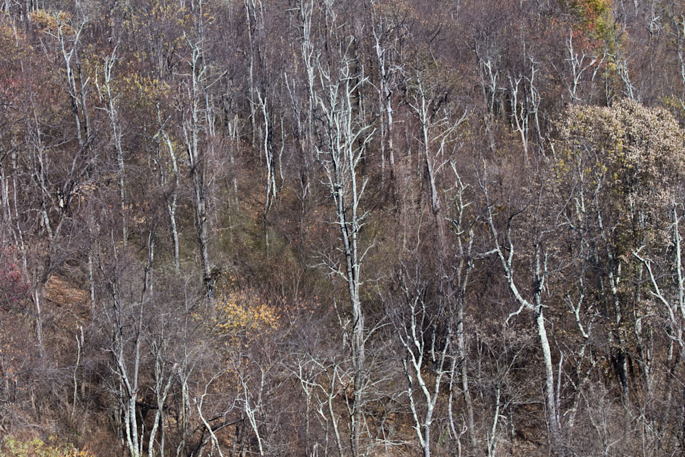 Fine Art Photographs of a Cold Winter in Shenandoah by Michael Pucciarelli