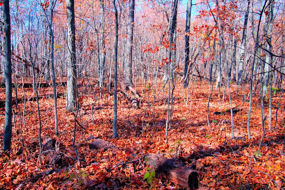 Fine Art Photographs of Shenandoah Forest During Autumn by Michael Pucciarelli