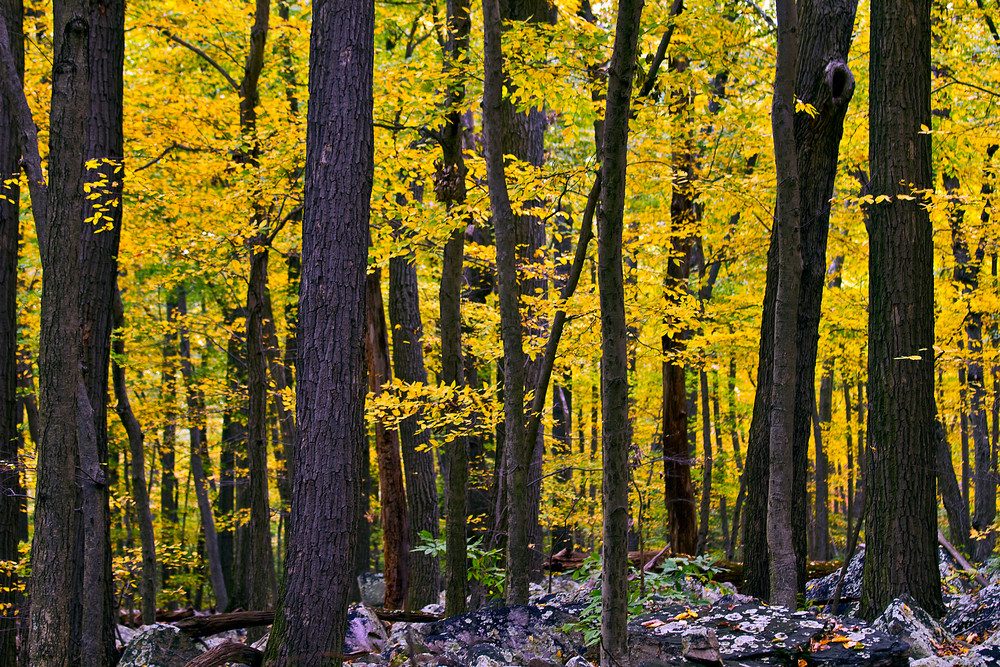 Fine Art Photograph of Sugarloaf Forest in Autumn by Michael Pucciarelli