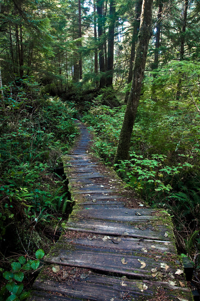 Into the Temperate Rain Forest