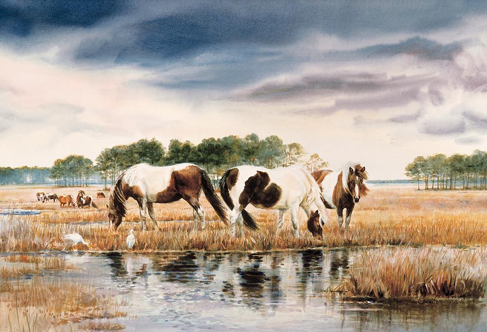 Chincoteaque Ponies