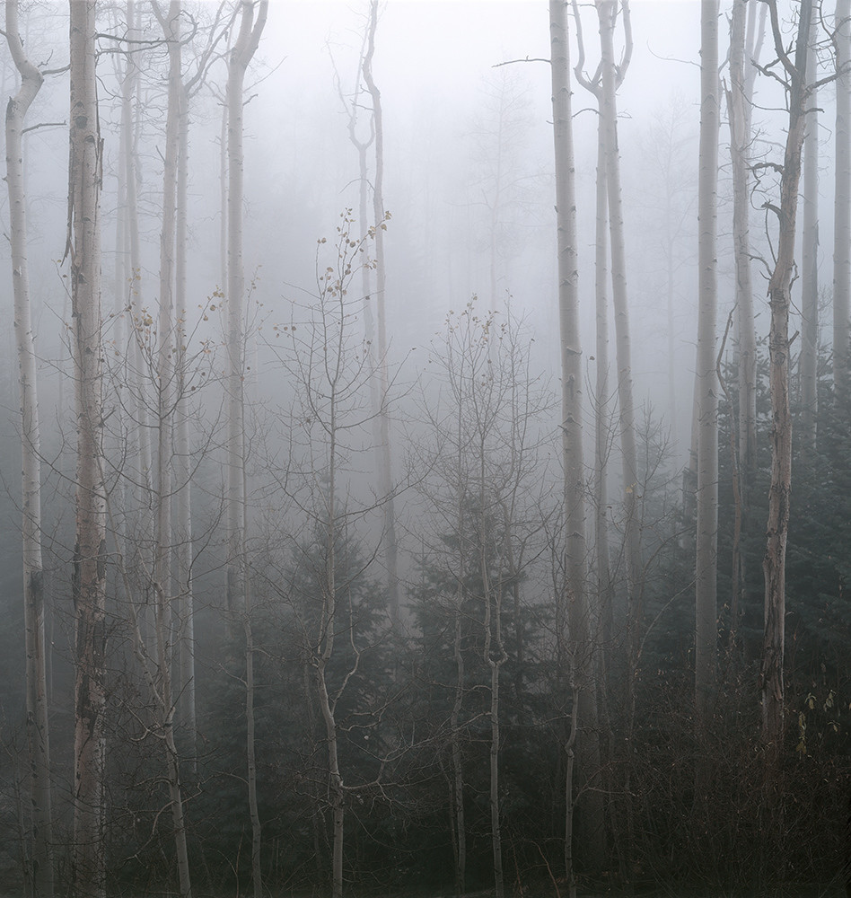 Aspens And Fog Art | Fine Art New Mexico