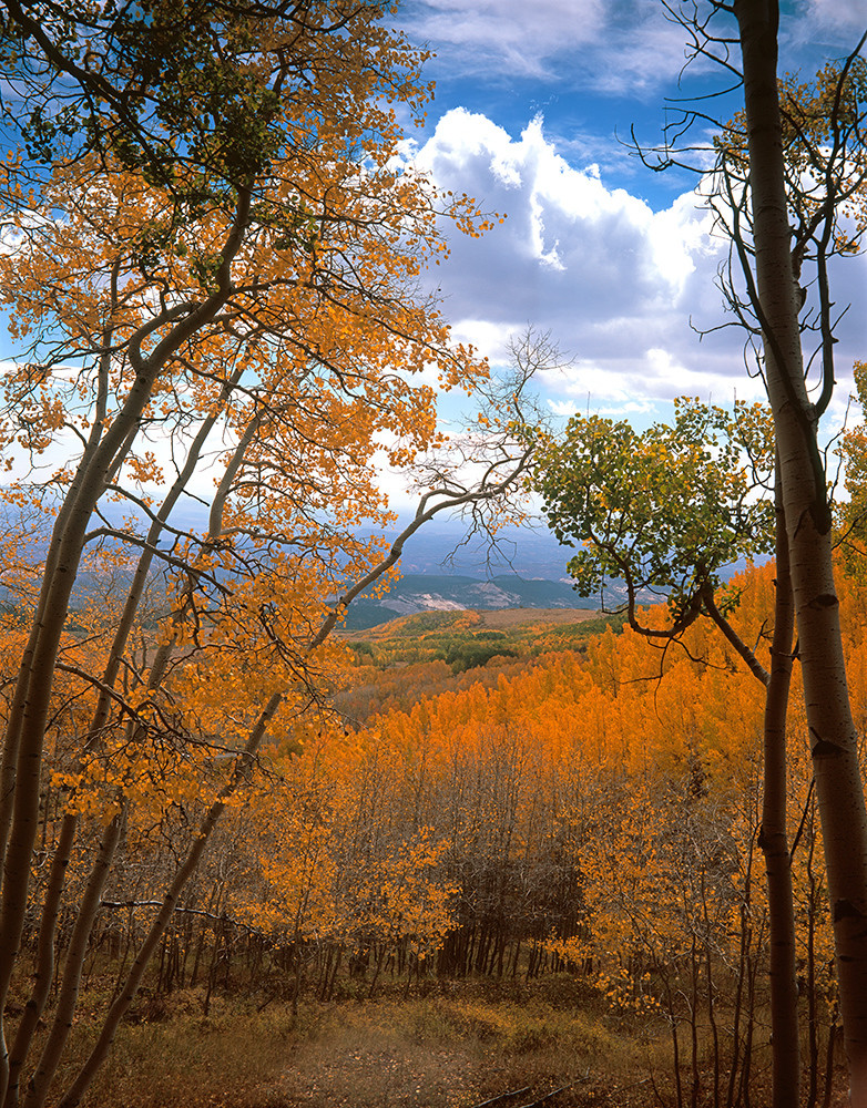 From The Aspens