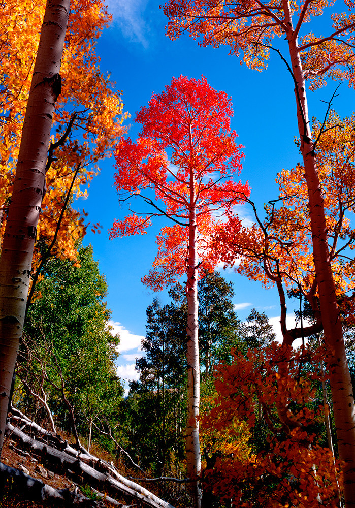The Red Aspen Art | Fine Art New Mexico