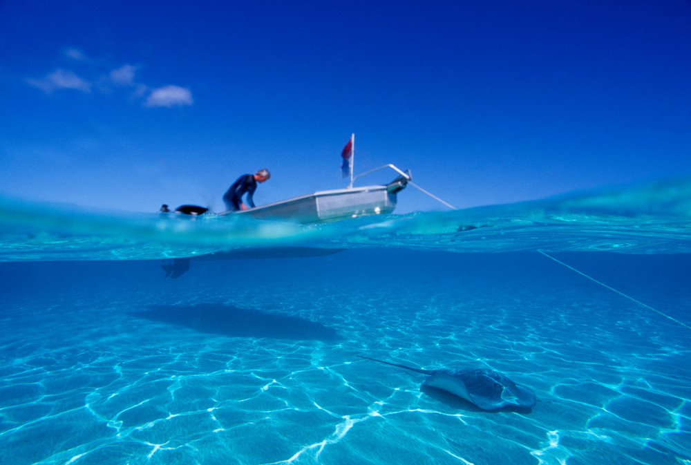 Moorea, French Polynesia; Eric Henningsen prepares for a dive at Sting Ray City, as a Tahitian Sting Ray swims under the boat