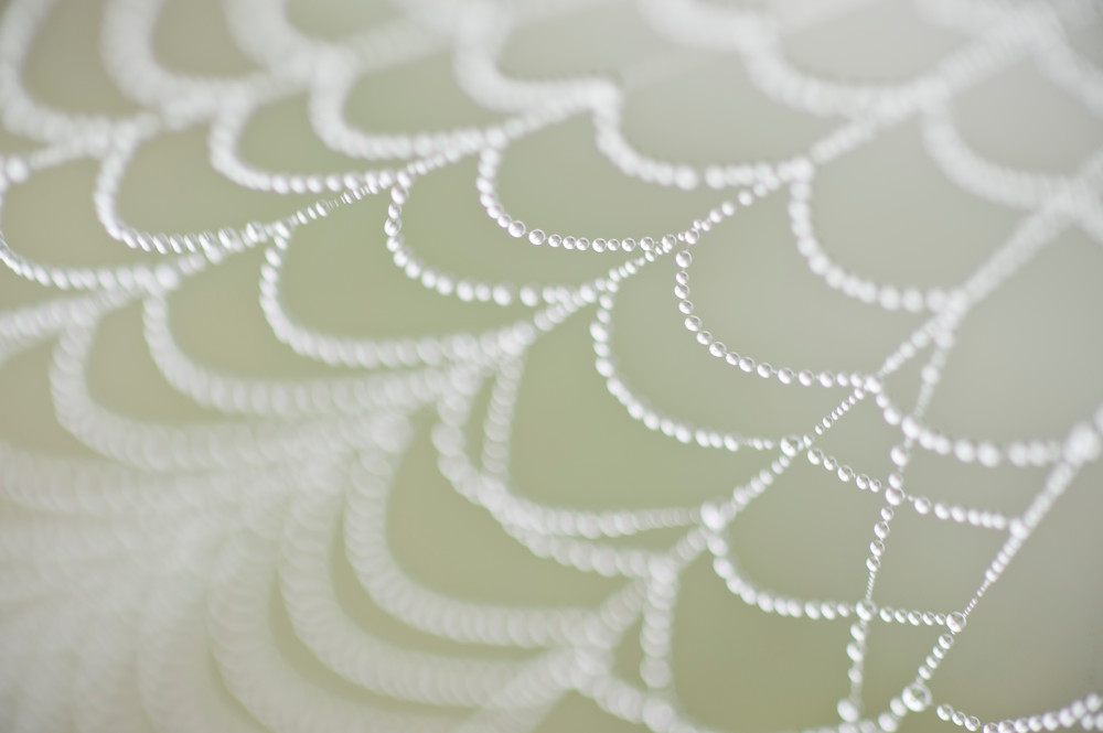 Spider Web & Dew, Damon, Texas