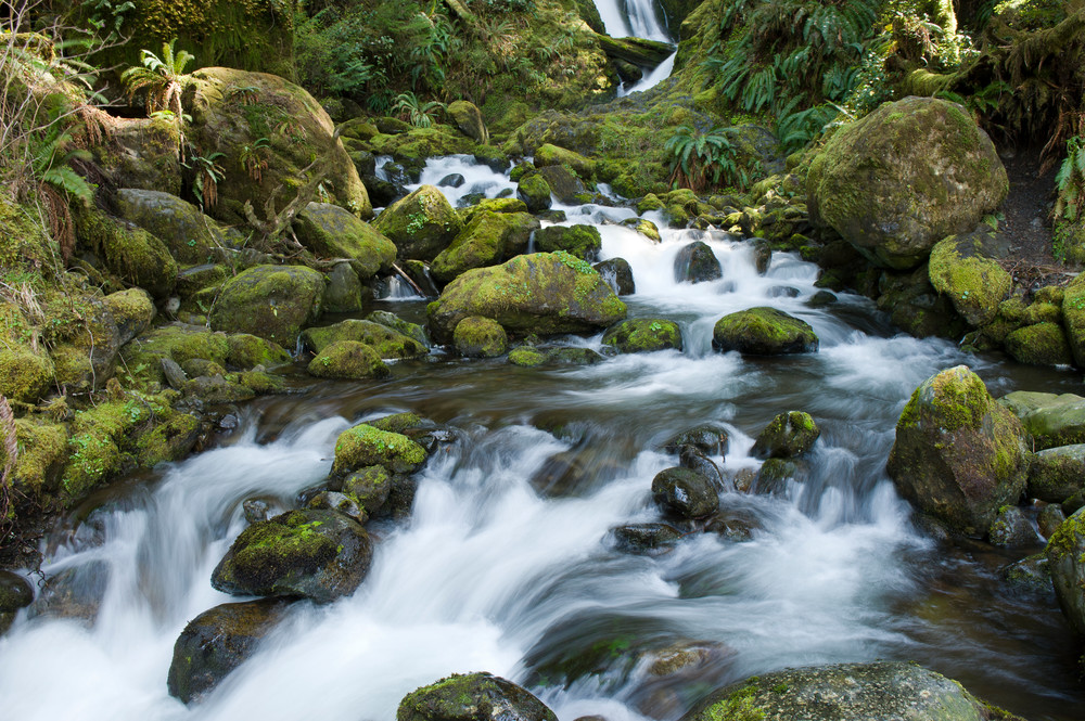 Bunch Creek, Quinault Rain Forest, Washington