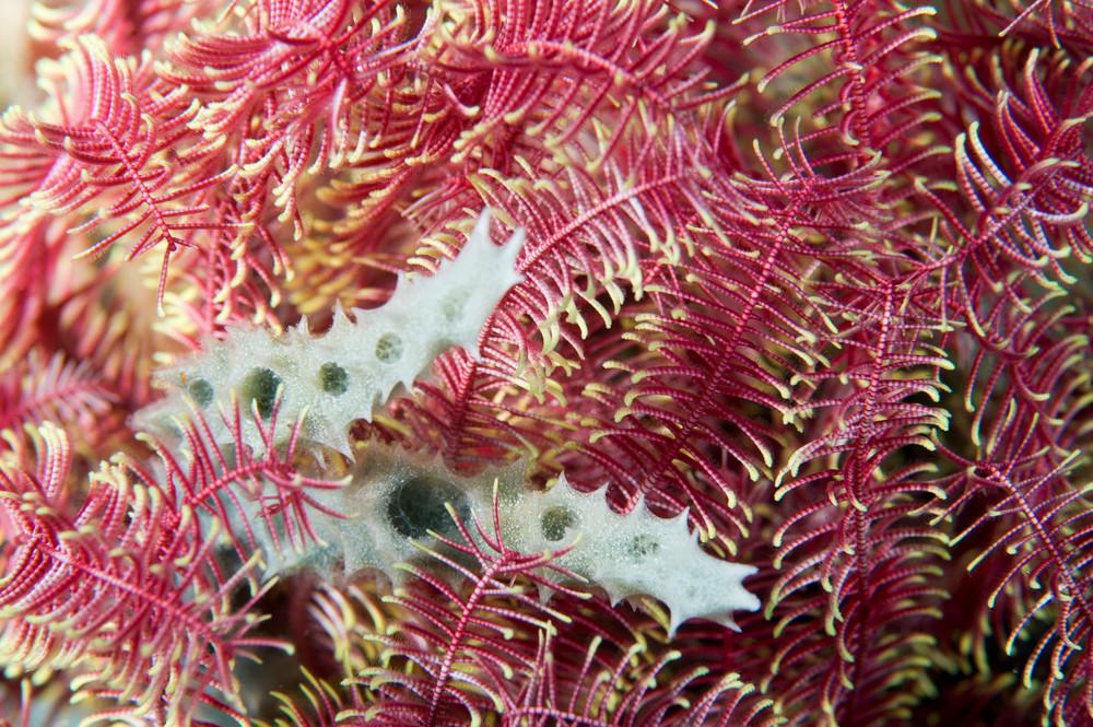 Feather Star & Sponge, Anilao, Philippines