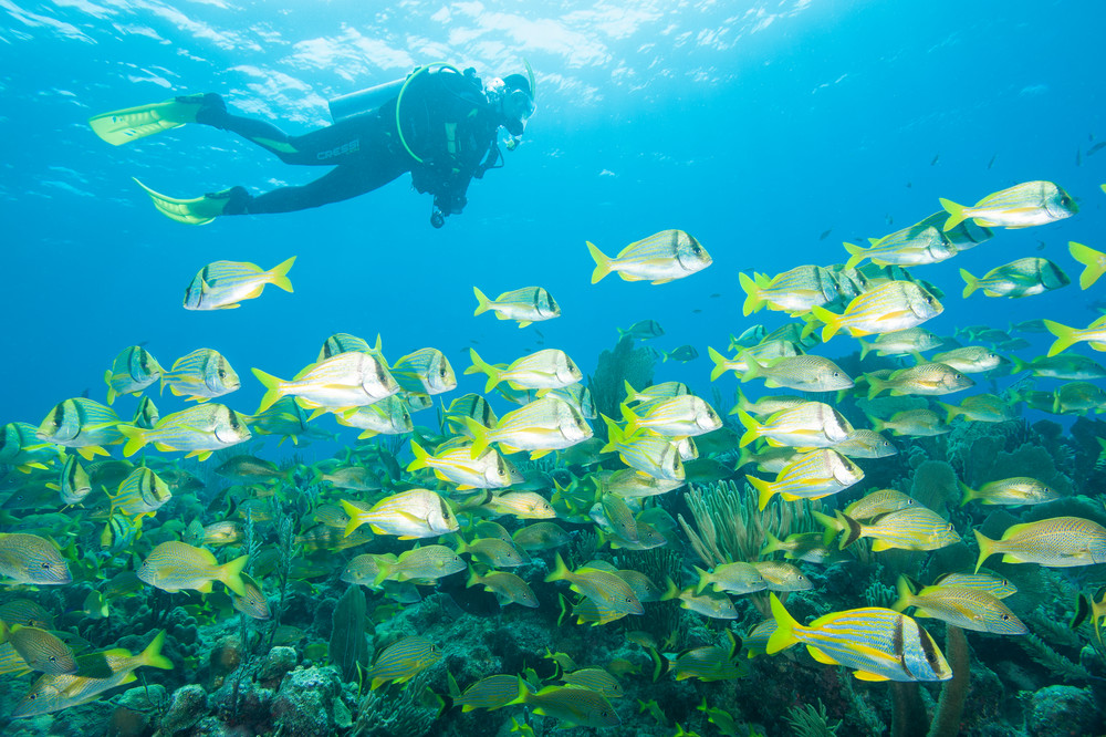 Grunts, Porkfish & Diver, Gardens of the Queen, Cuba