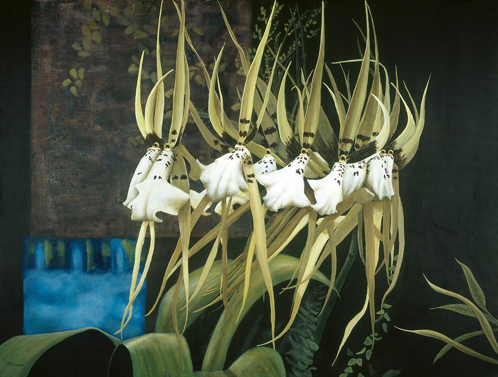 Brassia