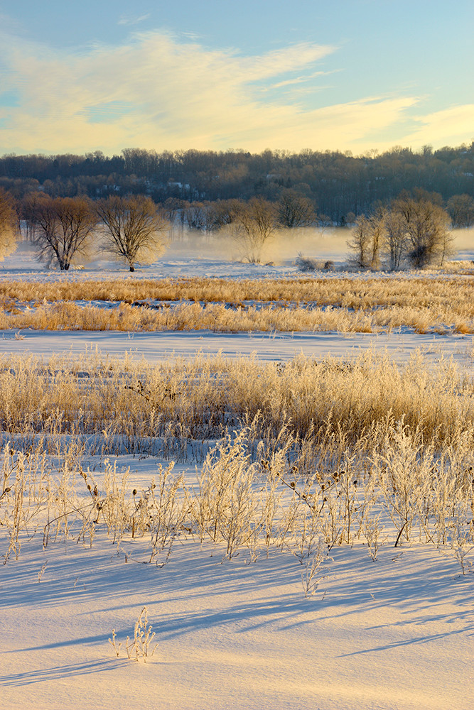 Morning Frost 4
