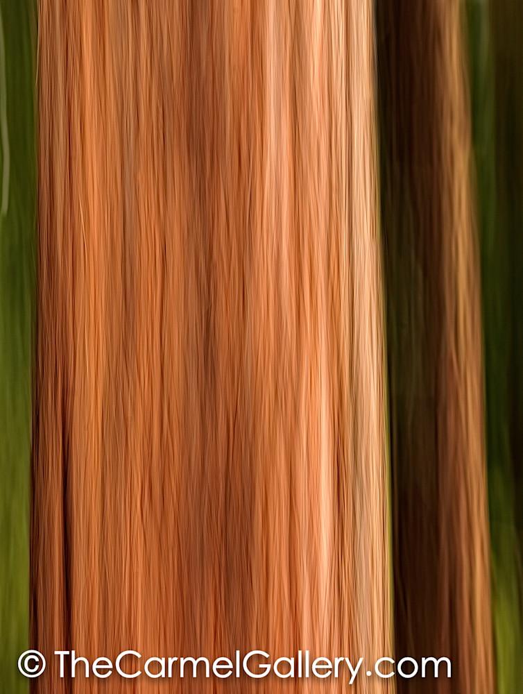 Redwood Grove I