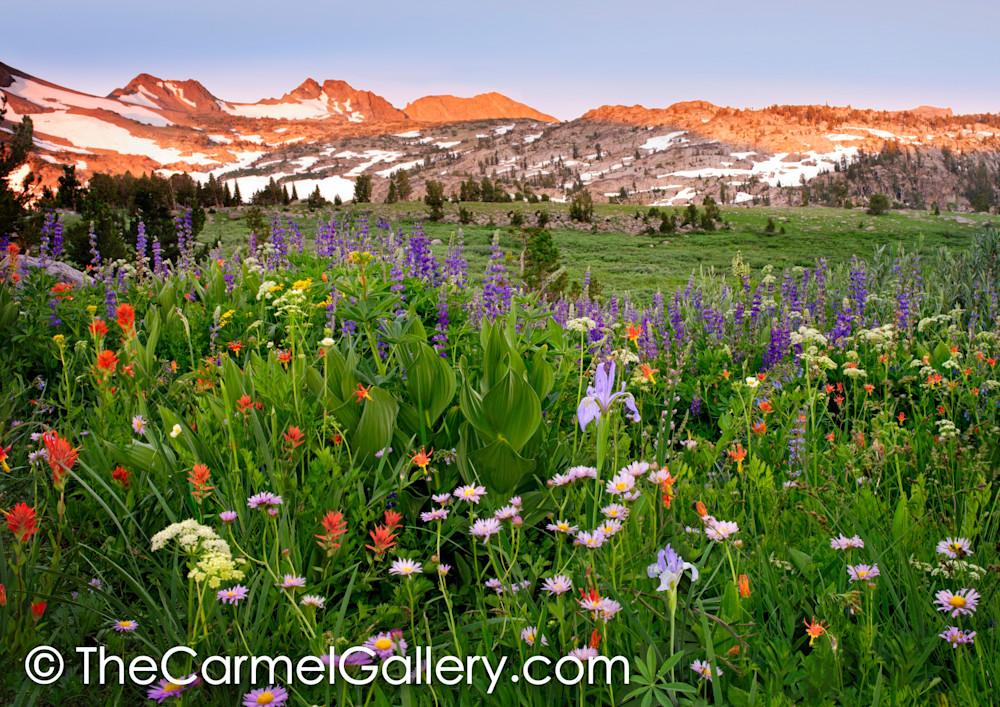Colors of Summer, High Sierra