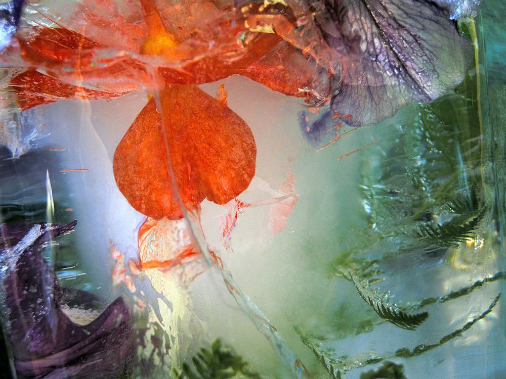 Icescape Geranium Art   Fine Art New Mexico