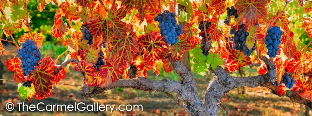 Harvest Season V