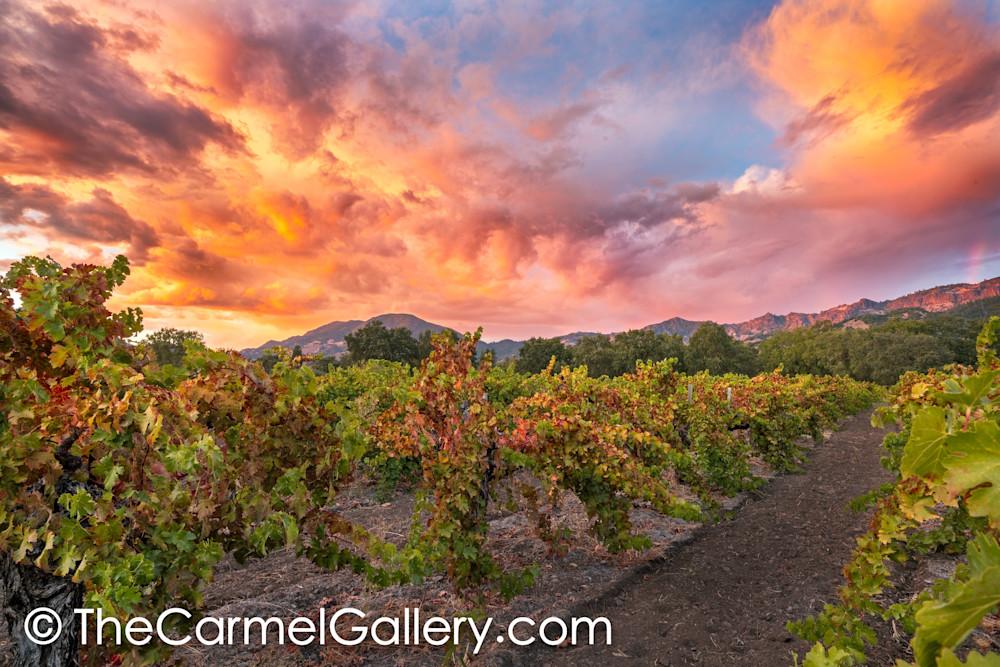 Sunset Sky, Calistoga