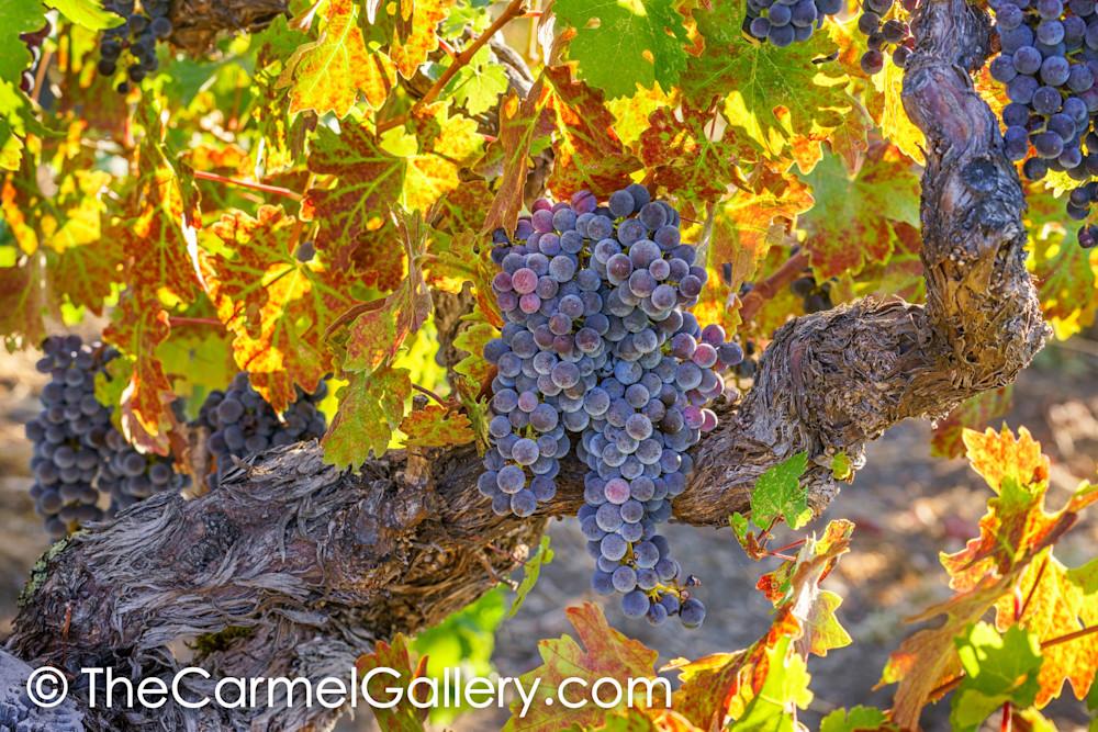 September Harvest II