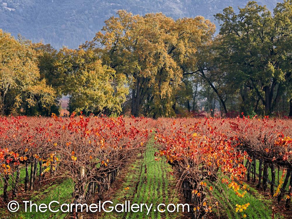 Autumn Oaks & Vines
