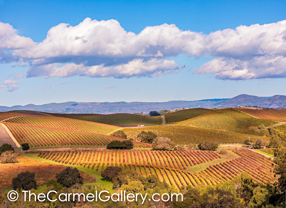 Autumn in the Carneros
