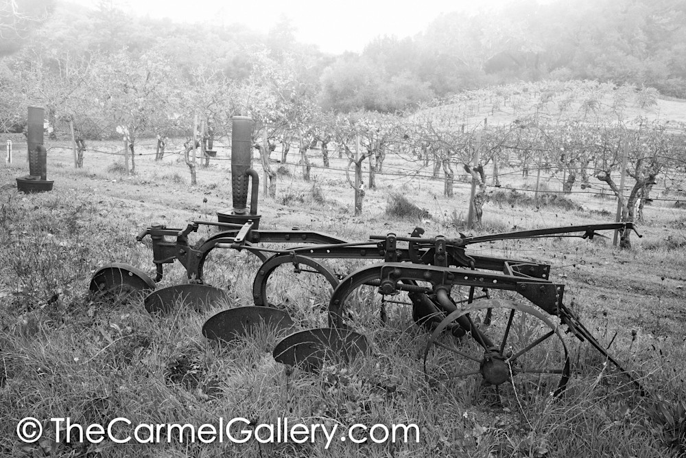 Early Farm Vineyard BW