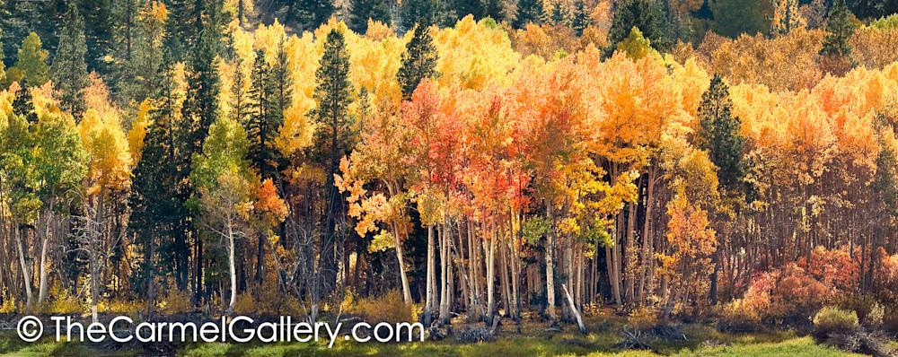 Lundy Canyon Autumn