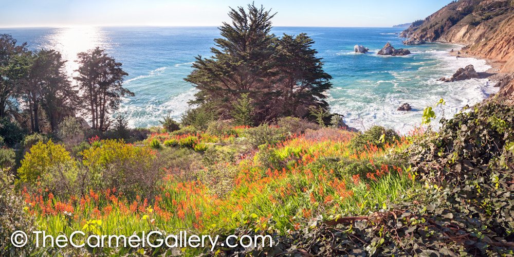 Wild Bloom California Coast