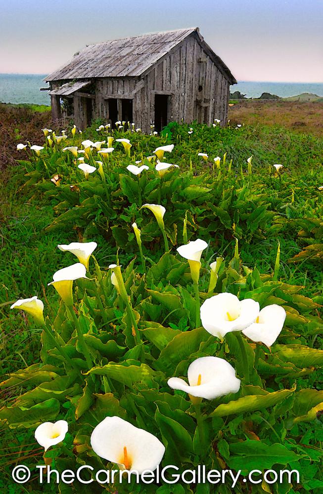 Spring at Sea Ranch