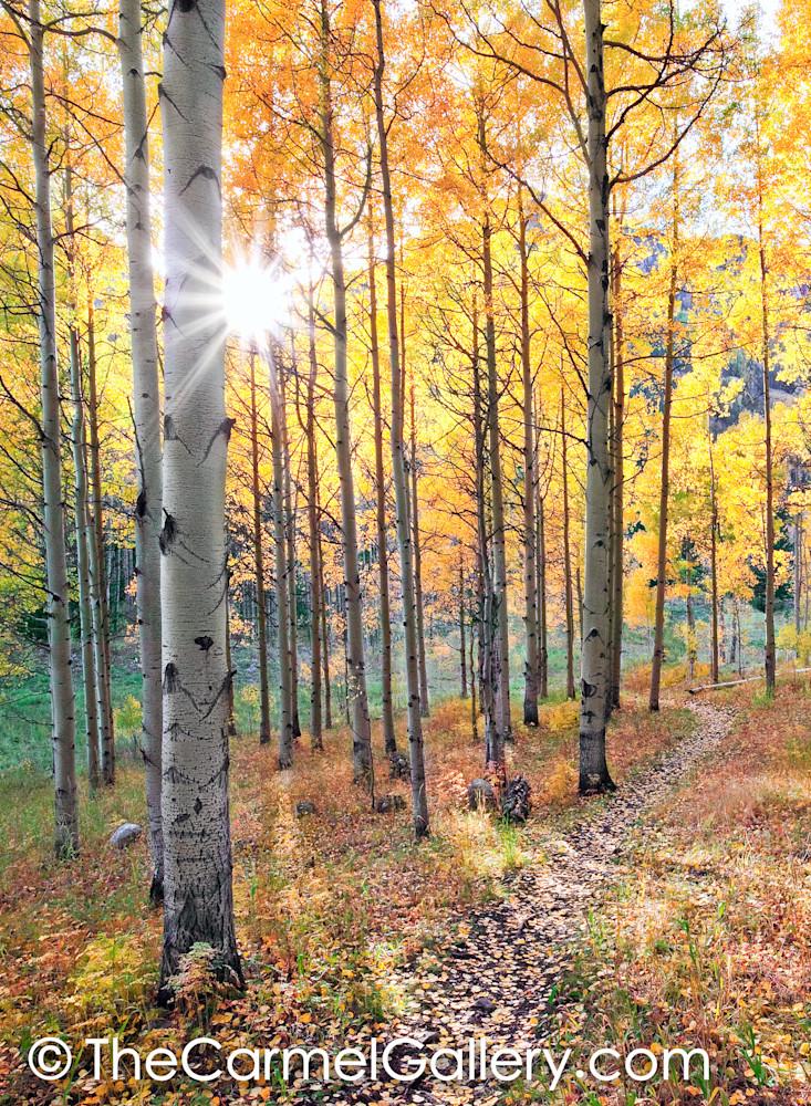 A Walk Through Autumn V
