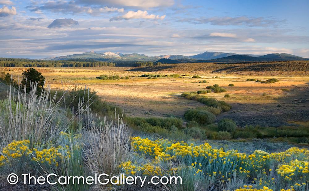 Summer Sage Martis Valley