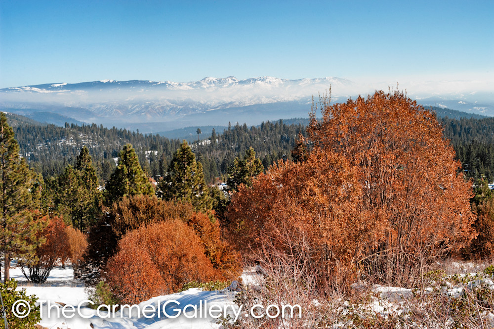 Winter Willows Mt Rose