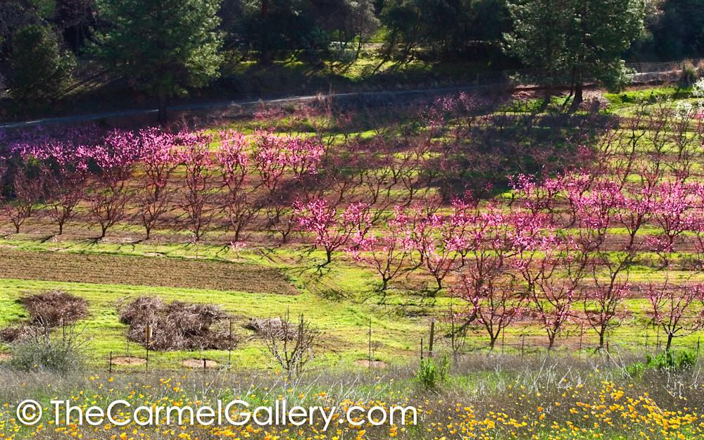 Spring in the Foothills alt