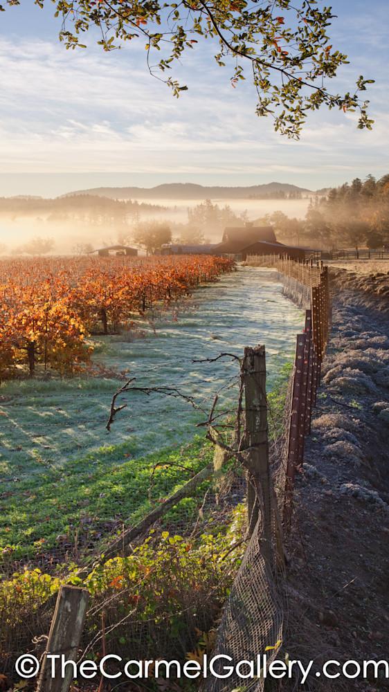 Autumn Frost Napa