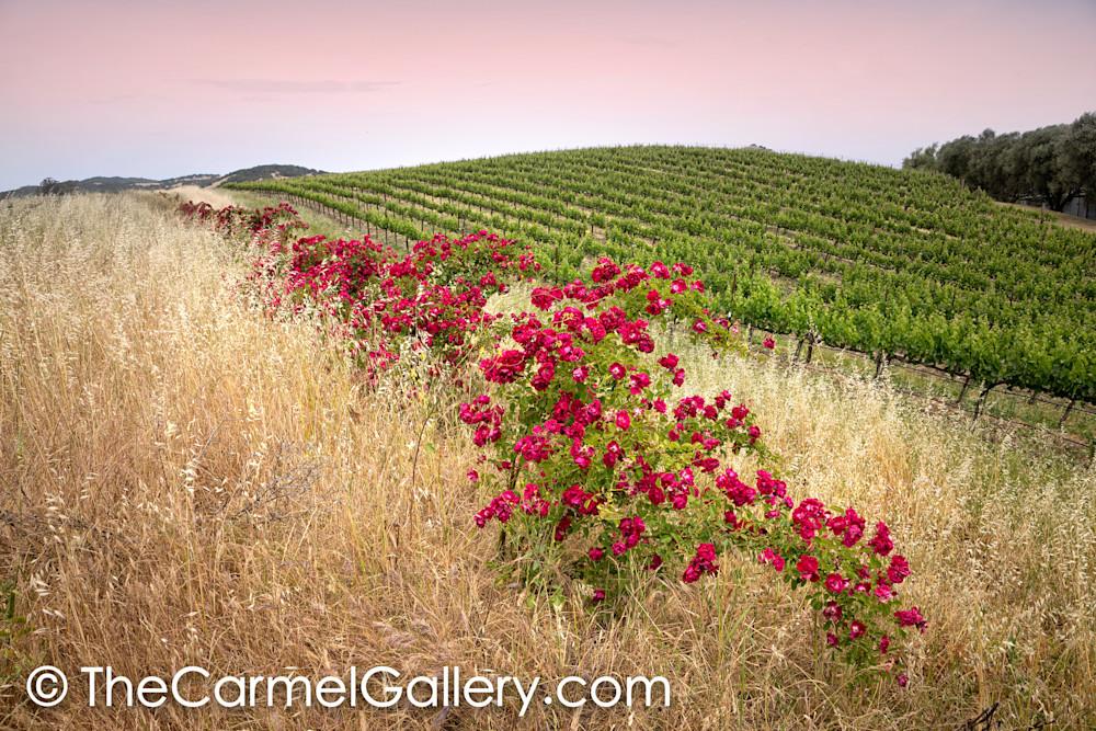 Wild Rose Wine Country