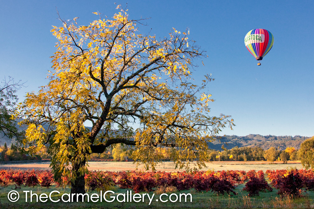 Calistoga Balloon