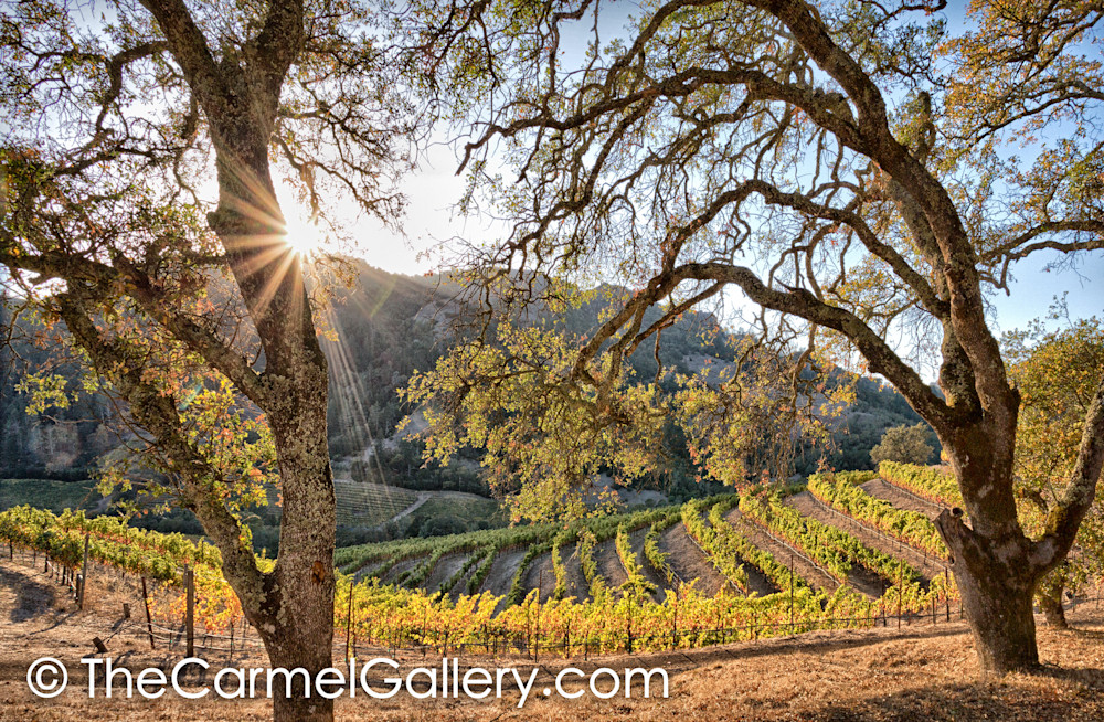 Setting Sun Wine Country