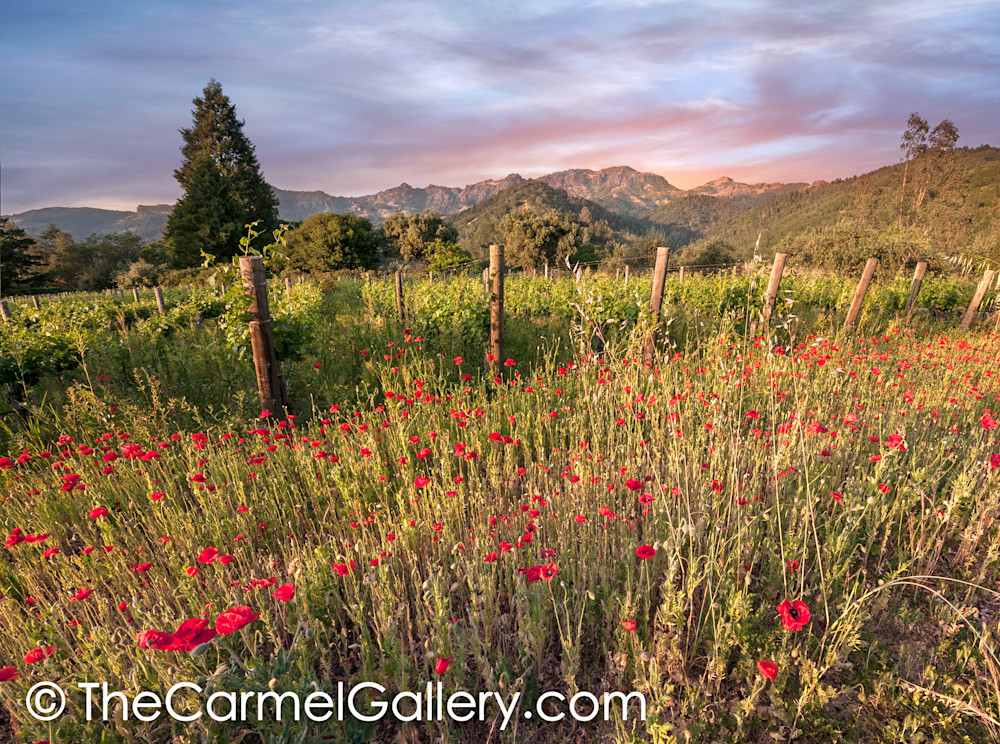 Wild Poppies and Palisades, Calistoga II