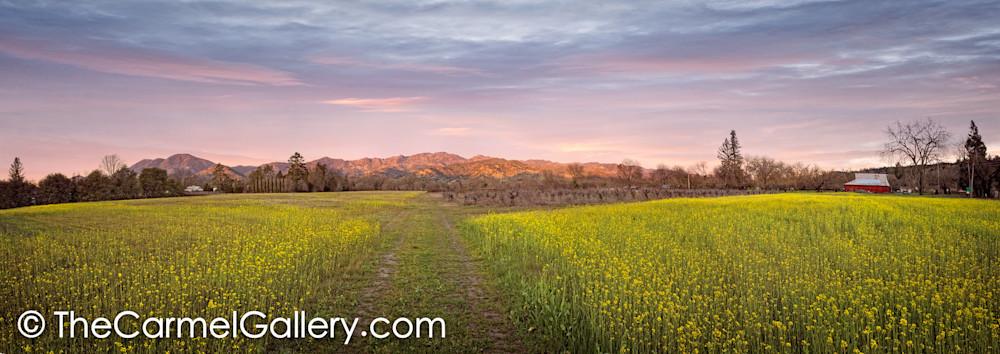 Calistoga Spring Panorama