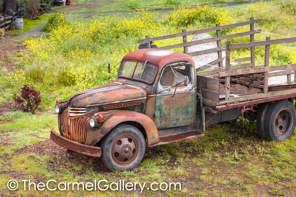 Rusted Truck and Mustard H