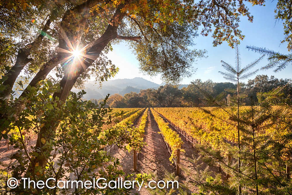Afternoon Sun Wine Country
