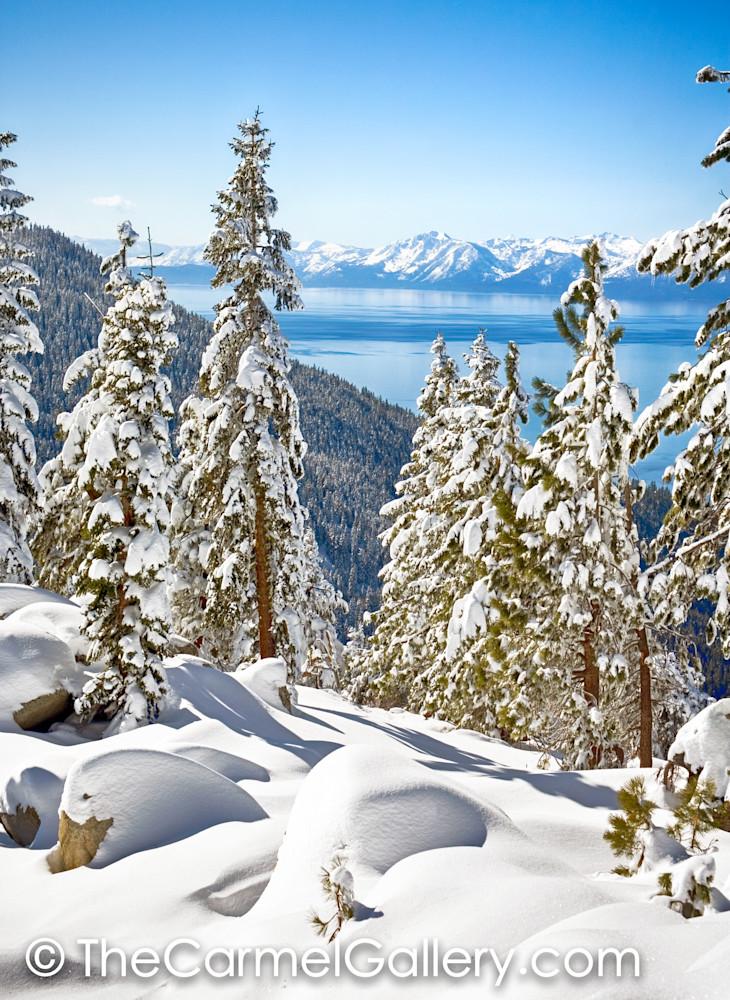 Blue Bird Tahoe