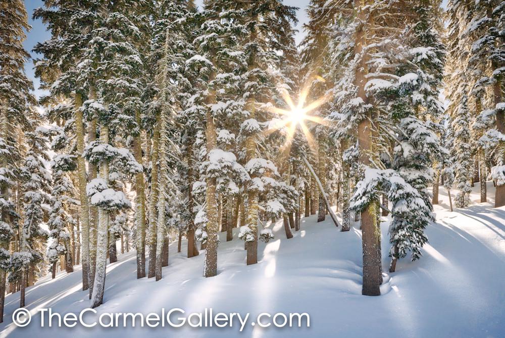 Sunlit Winter Morning